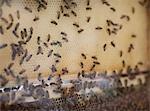 Ruche d'abeilles à New York farmers market.