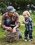 Cueillette des pommes avec son jeune fils de père