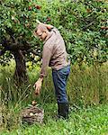 Cueillette des pommes homme