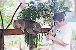 Bénévolat nourrir un ours de Koala (Phascolarctos cinereus) au sanctuaire de Koala Bear, Port Macquarie, Nouvelle Galles du Sud, Australie et Pacifique