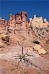 Formations rocheuses et genièvre mort, Monument National de Grand Staircase-Escalante, Utah, États-Unis d'Amérique, Amérique du Nord