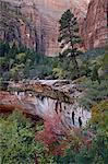 Arbres à feuillage persistant, les érables rouges et les roches rouges sur le sentier de Emerald Pools, Zion National Park, Utah, États-Unis d'Amérique, l'Amérique du Nord