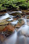 Cascades sur Yellow Dog Creek, forêt nationale de Coeur d'Alene National Forest, dans l'Idaho Panhandle, Idaho, États-Unis d'Amérique, Amérique du Nord