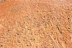 Rock engravings close to Twyfelfontein Lodge, Twyfelfontein,  Damaraland, Kunene Region, Namibia, Africa
