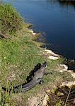 Parc National des Everglades, Floride, États-Unis d'Amérique, l'Amérique du Nord