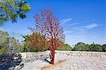 Yad Vashem Holocaust Memorial, Partisans Panorama memorial tree, Mount Herzl, Jerusalem, Israel, Middle East