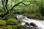 Rocky River Plym near Shaugh Prior in Dartmoor National Park, Devon, England, United Kingdom, Europe