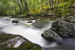 Rocky River Plym flowing through Dewerstone Wood in summer, Dartmoor National Park, Devon, England, United Kingdom, Europe