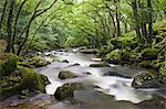 Rocky River Plym flowing through Dewerstone Wood in Dartmoor National Park, Devon, England, United Kingdom, Europe