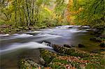 Autumn colours beside the River Barle near Tarr Steps, Exmoor National Park, Somerset, England, United Kingdom, Europe