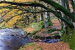 Autumn scenes beside Oare Water near Robbers Bridge, Exmoor National Park, Somerset, England, United Kingdom, Europe