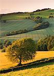Rolling farmland in summertime, Devon, England, United Kingdom, Europe