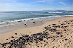 Hermosa Beach, Los Angeles, California, United States of America, North America