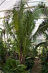Palmier d'intérieur de maison, Royal Botanic Gardens, Kew, patrimoine mondial de l'UNESCO, Londres, Royaume-Uni, Europe