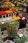 Flower stall, Bloemenmarkt, Amsterdam, Holland, Europe