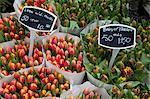 Tulpen, Bloemenmarkt, Amsterdam, Holland, Europa
