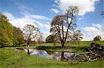 Spring trees and rainwater pond at Jacob Smith Park, Knaresborough, North Yorkshire, England, United Kingdom, Europe