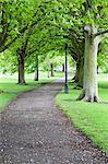 Frühjahr Bäume auf The Stray im Frühjahr, Harrogate, North Yorkshire, Yorkshire, England, Vereinigtes Königreich, Europa