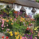 Fleur à front de chaume cottage, Devon, Angleterre, Royaume-Uni, Europe