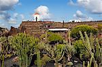 Jardin de Cactus (Cactus Garden), Guatiza, Lanzarote, îles Canaries, Espagne