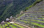 Une terrasse agricole, Machu Picchu, Pérou, péruvien, Amérique du Sud, Amérique du Sud, l'Amérique latine, Amérique du Sud Amérique latine. La cité perdue des Incas a été redécouverte par Hiram Bingham en 1911