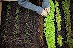 Teenage girl planting seedlings