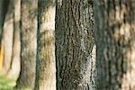 Ligne de troncs d'arbres