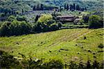 Vue d'ensemble des vignobles, Chianti, Toscane, Italie