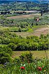 Greve in Chianti, Chianti, Toscane, Italie