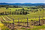 Vineyard, Chianti, Tuscany, Italy