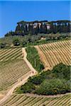 Overview of Vineyards, Lilliano, Chianti, Tuscany, Italy