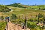 Vineyards, Lilliano, Chianti, Tuscany, Italy