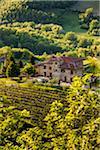 Ferme, Radda in Chianti, Toscane, Italie