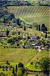 Vineyard, San Gimignano, Siena Province, Tuscany, Italy