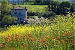 Blumenfeld und House, San Gimignano, Provinz Siena, Toskana, Italien