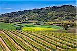 Montalcino, Val d'Orcia, Province de Sienne, Toscane, Italie