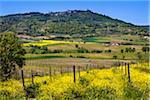 Montalcino, Val d'Orcia, Province of Siena, Tuscany, Italy