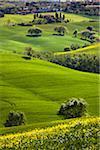 San Quirico d'Orcia, Siena, Tuscany, Italy