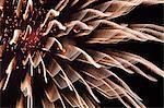 Summer fireworks in Omimaiko, Shiga Prefecture