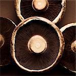 Le dessous des champignons portobello (gros plan)