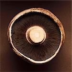 Le dessous du champignon portobello