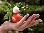 A hand holding a tomato, mozzarella and basil