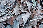 Nahaufnahme einer gefrorenen Blätter im winter