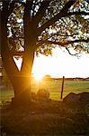 Ruhige Landschaft mit Baum und Sonnenaufgang im Hintergrund