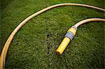 Garden hose on grass turf in lawn