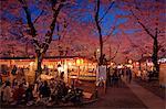 Hanami In Kyoto, Japan
