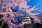 Cerisier en fleurs et Château de Hirosaki, Aomori Prefecture, Japon
