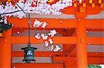 Fleur de la cerise à Heian Shrine, Kyoto, Japon