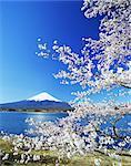 Sakura et Mt. Fuji, Kawaguchiko, préfecture de Yamanashi, Japon