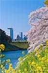 Bâtiment du Parlement Tokyo, Japon